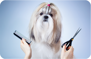 Pet Grooming Solutions